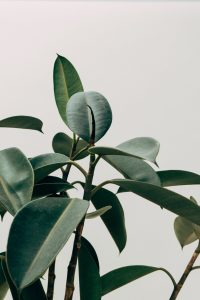 Can plants really improve your home's indoor air quality?