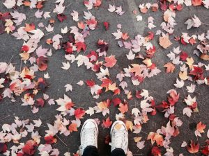 4 Things to Consider When Raking Your Leaves