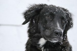 2 Tips for Dog Safety in Winter Months